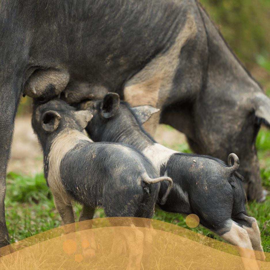 TUTELARE la biodiversità animale di interesse zootecnico